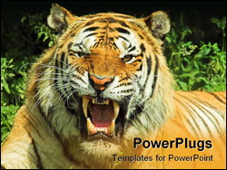 PowerPoint Template - tiger snarl facing camera