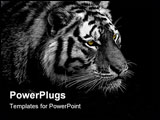 PowerPoint Template - BW low key tiger with yellow eyes for even stronger expression