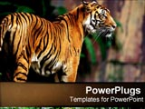 PowerPoint Template - A tiger in the jungle