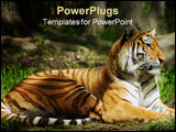 PowerPoint Template - Full-body shot of a Siberian Tiger laying down.
