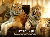 PowerPoint Template - two tigers are resting in the shade