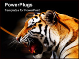PowerPoint Template - one bengal big tiger on a black background