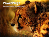 PowerPoint Template - Portrait of a prowling cheetah at sunset