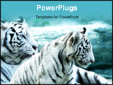 PowerPoint Template - two White tigers shot close up .