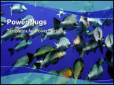 PowerPoint Template - Exotic tropical fishes in Red sea stunning