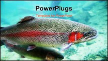 PowerPoint Template - A close-up image of Rainbow Trout