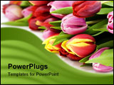 PowerPoint Template - fresh tulips on white background. With sample text