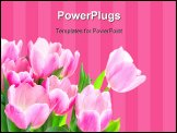 PowerPoint Template - Tulip flowers. Isolated over white background. Spring.