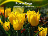 PowerPoint Template - sunny yellow tulips