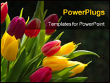 PowerPoint Template - an image of tulips