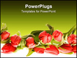 PowerPoint Template - red tulips frame isolated on white background