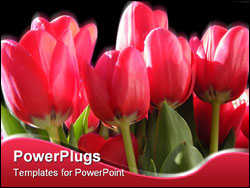 PowerPoint Template - Vivid red tulips in Bright blue sky
