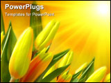PowerPoint Template - Tulips against blue sky with a clouds