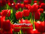 PowerPoint Template - Field of tulip focal point near middle on tulips