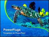 PowerPoint Template - Green sea turtle cleaning station with rasses