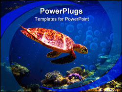 PowerPoint Template - Hawksbill Turtle swiming like flying at Maldives
