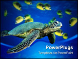 PowerPoint Template - A turtle swimming underwater