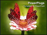 PowerPoint Template - two gulf fritillary butterflies alighting on a flower.