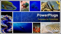 PowerPoint Template - Collage of the colorful underwater life in Asia