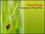 PowerPoint Template - an uphill struggle for a lonely ladybug