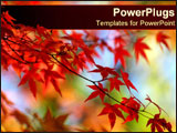 PowerPoint Template - Vibrant fall leaves.
