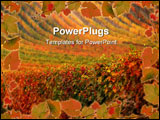 PowerPoint Template - Beautiful colorful vineyard in the autumn sun