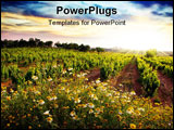 PowerPoint Template - Landscape of countryside with a vineyard and flowers at sunset