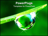 PowerPoint Template - Water drop on the fresh green shoot. Super Macro