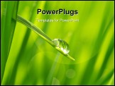 PowerPoint Template - Dew drop on a blade of grass