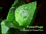 PowerPoint Template - Closeup view of Cactus with water drops
