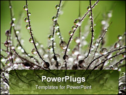 PowerPoint Template - Close-up of wet clematis seed with drops