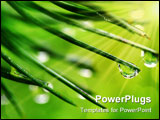 PowerPoint Template - Close-up of rain drops on pine needles on fresh green background and sun rays