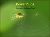 PowerPoint Template - he spider built up its web hoping for food. As the wind blew the drop of water wiggled in place att