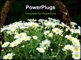 PowerPoint Template - white daisies on a green field white daisies on a green field