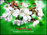 PowerPoint Template - Branch of spring white flowers against floral green background