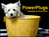 PowerPoint Template - White terrier in a yellow basket