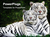 PowerPoint Template - tiger and tigress lying together on the grass