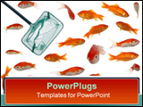 PowerPoint Template - fishingnet is in an aquarium full of goldenfish