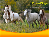 PowerPoint Template - American wild mustang horses