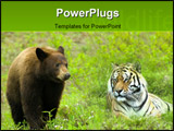 PowerPoint Template - A curious young brown bear in a meadow