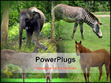 PowerPoint Template - 9 animal wildlife collage