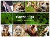 PowerPoint Template - a collage photo of some wild animals