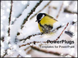 PowerPoint Template - Titmouse On Tree On Snow-clad Branch In Winter