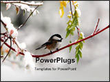PowerPoint Template - winter bird is foraging in the forest after a snowfall