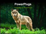 PowerPoint Template - One wolf standing on green hillock and look at photograph.