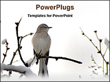 PowerPoint Template - western king bird in a tree