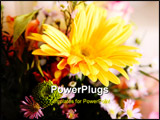 PowerPoint Template - Yellow green and white flowers. Nature image