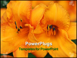PowerPoint Template - what we have here are two orange yellow flowers growing up together.
