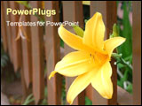 PowerPoint Template - yellow flower sticking out from a fence