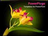 PowerPoint Template - yellow cattleya orchid from hawaii